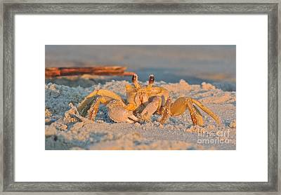 Ghost Crab Framed Print by Eve Spring