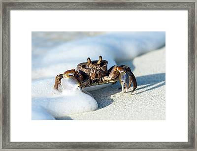 Ghost Crab In The Foam Line Framed Print by Peter Chadwick