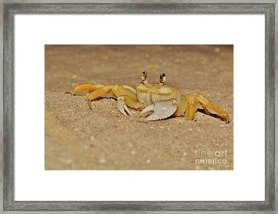 Ghost Crab Framed Print by Lynda Dawson-Youngclaus