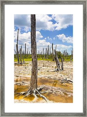 Ghost Forest Of The Yucatan Framed Print