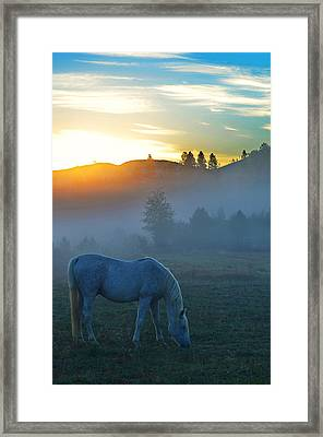 Ghost Horse Framed Print by Annie Pflueger