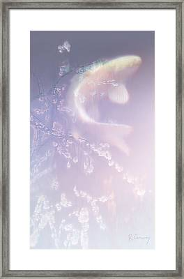 Ghost Koi Rising Framed Print by Robert Conway