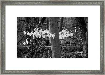 Ghost Leaves Framed Print by Steven Ralser