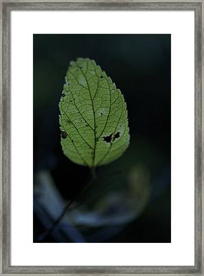 Ghost Of Summer Framed Print by Jane Eleanor Nicholas