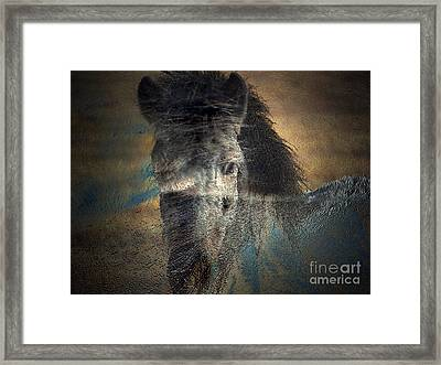 Ghost Pony Framed Print