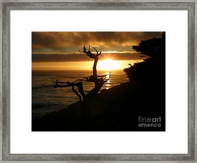 Ghost Tree At Sunset Framed Print