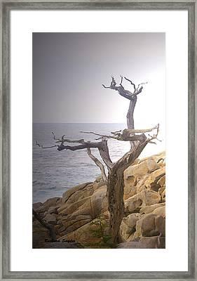 Ghost Tree Detail Framed Print by Barbara Snyder