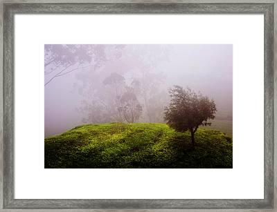 Ghost Tree In The Haunted Forest. Nuwara Eliya. Sri Lanka Framed Print by Jenny Rainbow