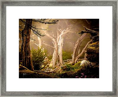 Ghost Tree Framed Print by TK Goforth