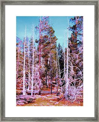 Ghost Trees Of The Yellowstone Framed Print by Ann Johndro-Collins
