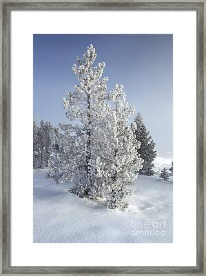 Ghost Trees Of Yellowstone Framed Print by Sandra Bronstein