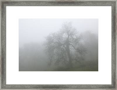 Ghostly Oak In Fog - Central California Framed Print by Ram Vasudev