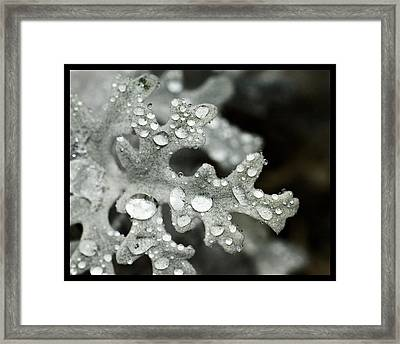Framed Print featuring the photograph Ghostly Plant  by Robert Culver
