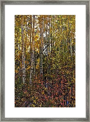 Ghosts Of A Quaking Aspen Framed Print
