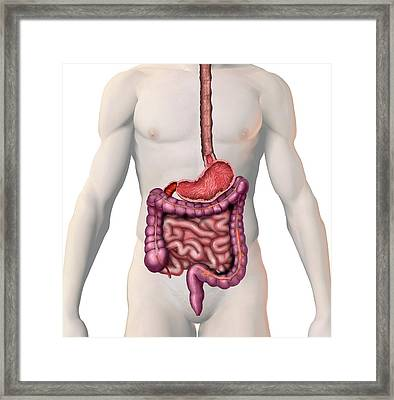 Gi Tract Framed Print by Carol & Mike Werner