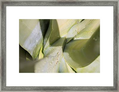 Giant Agave Abstract 3 Framed Print