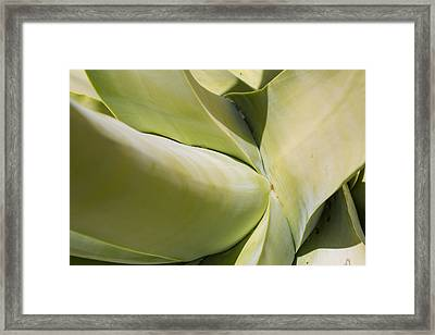 Giant Agave Abstract 9 Framed Print
