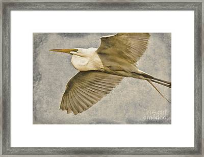 Giant Beauty In Flight Framed Print by Deborah Benoit