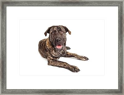 Giant Breed Puppy Dog Framed Print