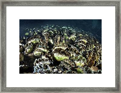 Giant Clam Farm Framed Print