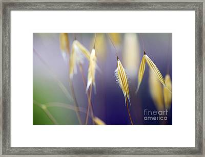 Giant Feather Grasses  Framed Print
