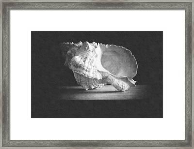 Giant Frog Shell Framed Print by Frank Wilson
