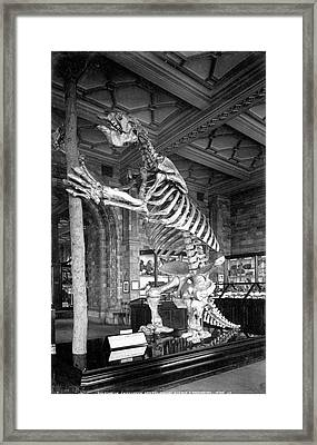 Giant Ground Sloth Framed Print by Natural History Museum, London
