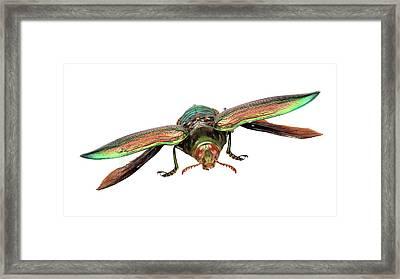Giant Jewel Beetle Framed Print