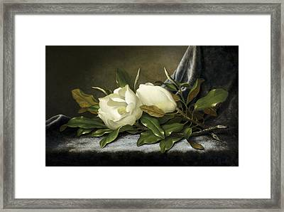 Giant Magnolias Framed Print by Martin Johnson Heade