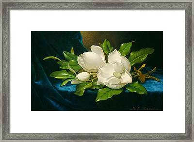 Giant Magnolias On A Blue Velvet Cloth Framed Print
