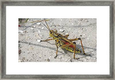 Framed Print featuring the photograph Giant Orange Grasshopper by Ron Davidson