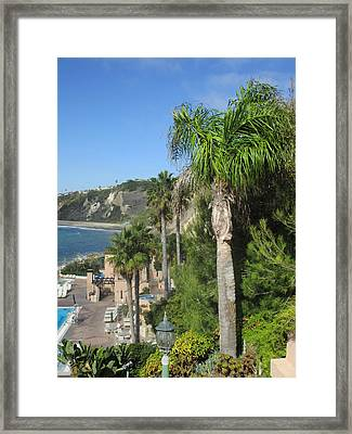 Giant Palm Framed Print