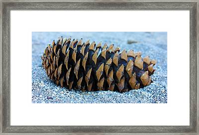 Giant Pinecone Framed Print