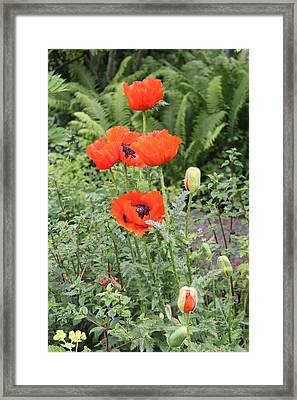 Framed Print featuring the photograph Giant Poppies by David Grant