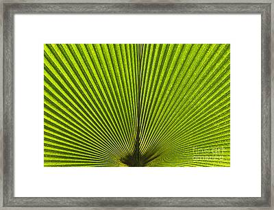 Giant Pritchardia Leaf Pattern Framed Print by Tim Gainey