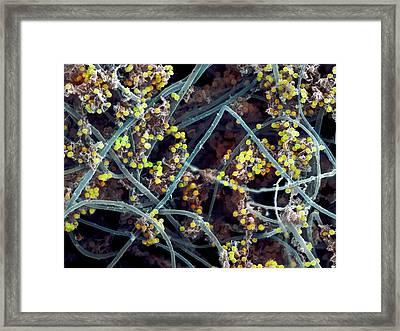 Giant Pufball Spores Framed Print