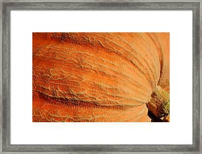 Giant Pumpkin Framed Print