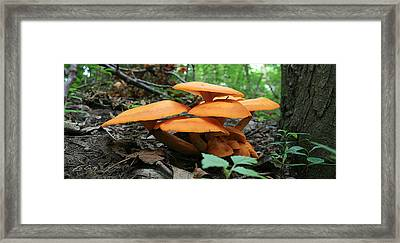 Framed Print featuring the photograph Giant Red Mushrooms by Ed Cilley
