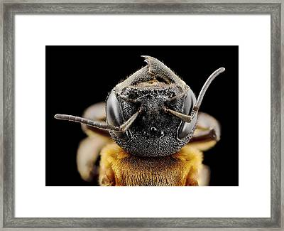 Giant Resin Bee Framed Print by Us Geological Survey