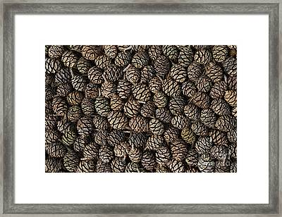Giant Rewood Cones Framed Print by Tim Gainey
