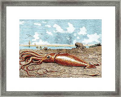 Giant Squid, 1887 Framed Print by Science Source
