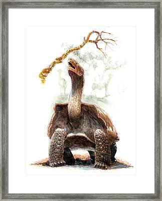 Giant Tortoise Framed Print by Deagostini/uig