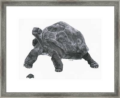 Giant Tortoise Framed Print by Lucy D