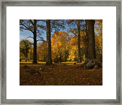 Framed Print featuring the photograph Giant Trees And Ducks Feeding by Jose Oquendo