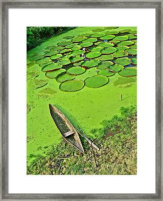 Giant Water Lilies And A Dugout Canoe In Amazon Jungle-peru Framed Print
