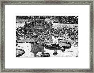 Giant Water Lilies Framed Print by Science Photo Library