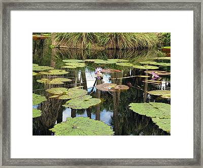 Giant Water Lilies Framed Print by Zina Stromberg