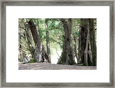 Giants Framed Print by Ange Sylvestri