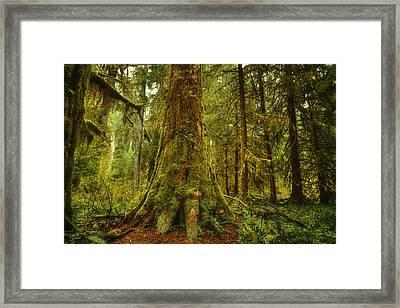 Giants Foot Framed Print