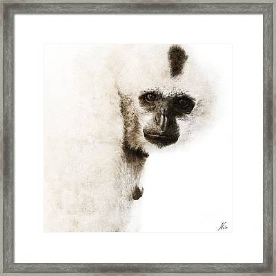 Crested Gibbon #1 Framed Print